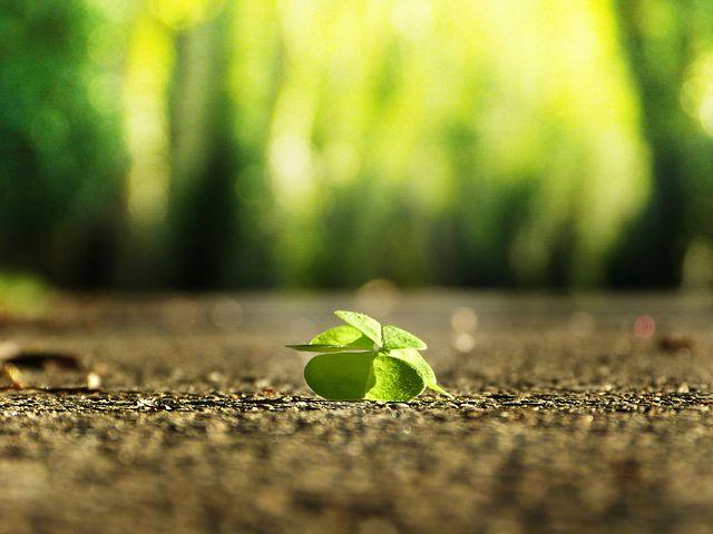 four leaf clover 3336774 480 こびと株 com